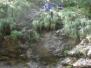 Bled 2009